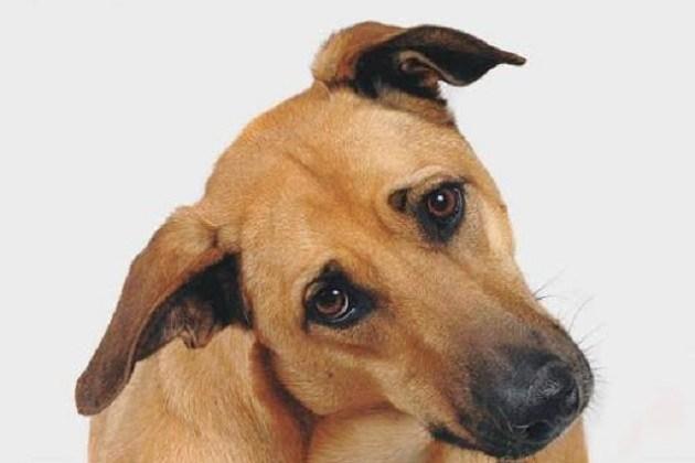 Leilão online arrecada recursos para entidades de proteção animal do Paraná