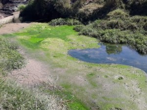 Com Racionamento De Água Em Palmeira, Vereadores Discutem Contrato Com A Sanepar