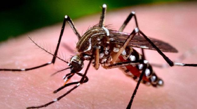 Telêmaco Borba inicia aplicação de inseticida contra a dengue amanhã (2), confira cronograma