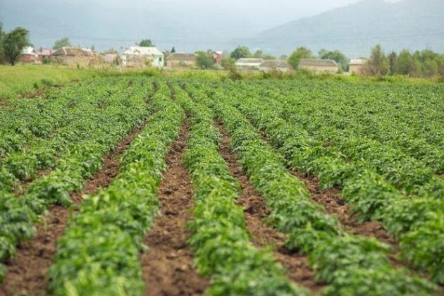 Geada é mais preocupante do que neve para a agricultura, afirma professora da UEPG