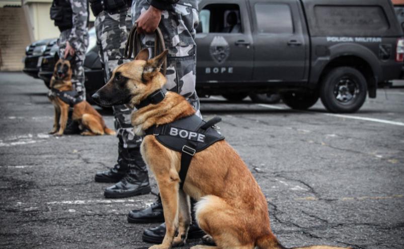 Apreensão de drogas com uso de cães da PM aumenta em quase 1.000% no Paraná