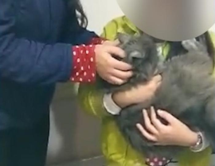 Homens roubam carro com gatinha dentro e animal é devolvido na delegacia no Paraná