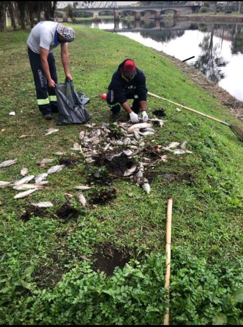 Prefeitura de Castro e órgãos ambientais investigam morte de peixes no Rio Iapó